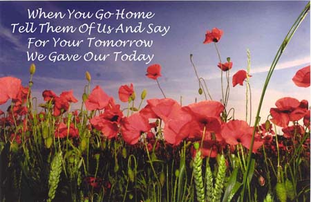 Remembrance day poppy images