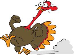 turkey photos free download