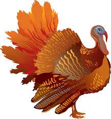 turkey photos free