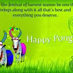 Happy Pongal Messages of 2017 Greetings