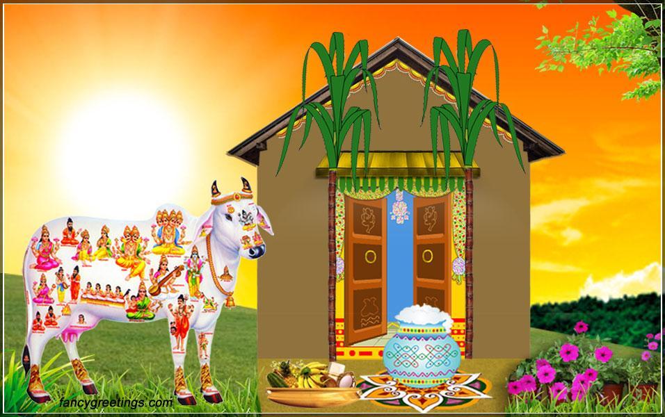 pongal photos