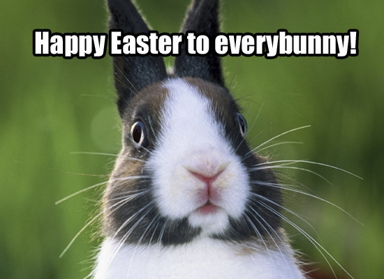 Cute funny easter Quotes pictures
