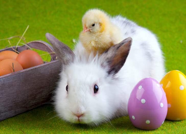 Funny Easter Bunny Photos