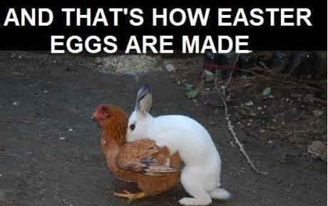 Funny Easter Photos