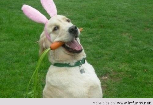 Funny Happy Easter Pictures 2018