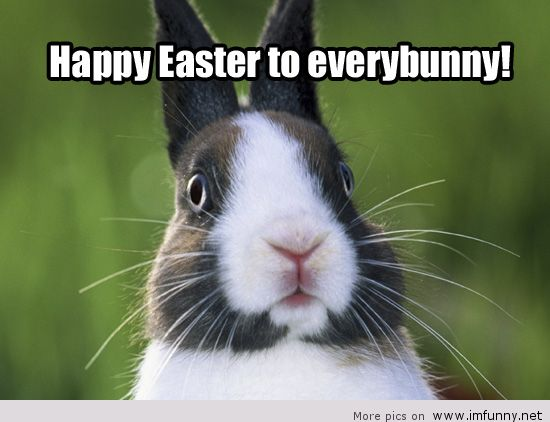 Funny Happy Easter Pictures