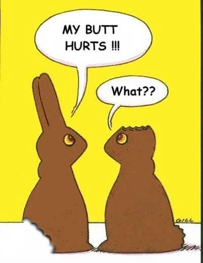easter bunny Funny photos
