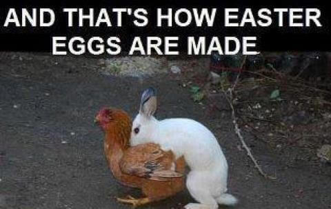 funny easter pictures for adults